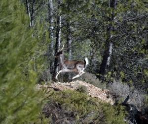 Souvenirs de chasse | Saison 2014/15 - I