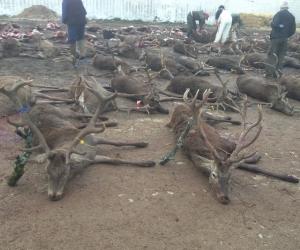 Souvenirs de chasse | Saison 2014/15 - IV